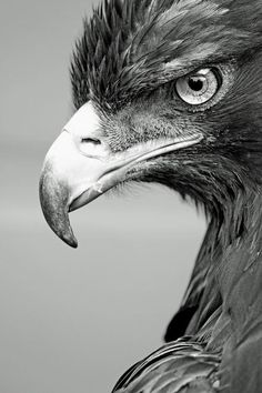 Passion4Life • emilanton: The look...that is one not so happy looking bird...