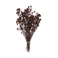 Oregano - Dried Purple - 3 bunches - Price: $13.75 : Dried Flowers R... ($14) ❤ liked on Polyvore
