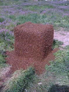 When all the bees decide that they need to get out.  Swarm