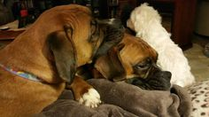 Brotherly love. Tucker using Buddy as a pillow. Millie just wants her brothers to get down.