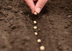 Plant bloembollen met je kinderen of zaai tuinkers. Sta ook zeker stil bij de evolutie en wat het nodig heeft om te groeien. Op zoek naar een stappenplan? Kijk vlug op onze site.