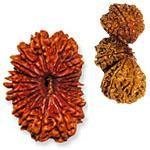 Buy All types of Rudraksha, Rudraksha Beads and Malas   Rudraksha Collection   Rudra centre Canada