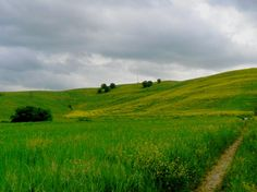 low and smooth hills of the roman countryside landscape, an infinite expanse of fields and grass