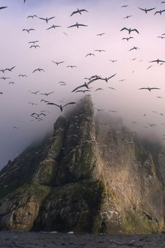 Gannets above Boreray, St Kilda by Seaharris