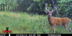 """Tall Tine"" DeerHuntingbigbucks.com Kansas"
