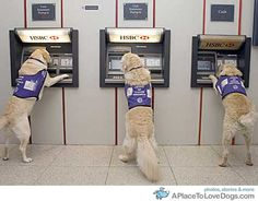 There is a British charity called Canine Partners, that amazingly trains dogs to withdraw money from cash machines for their disabled owners. The dogs are trained to insert and withdraw cards at ATMs to help owners in wheelchairs who are often not able to do it themselves.