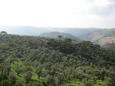 LEBANESE COUNTRYSIDE - Yahoo Image Search Results