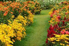 Die Kombination aus Stauden und einjährigen Pflanzen ist nicht nur pflegeleicht, sie begeistert auch mit langanhaltender Blütenfülle – und das jeden Sommer m