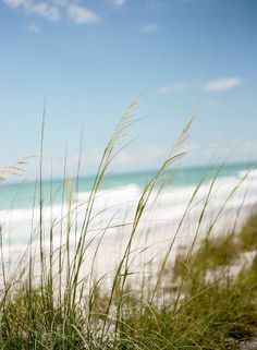 Florida beach | photography by http://www.msp-photography.com/