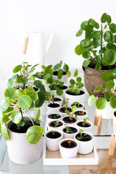 Herb Garden, Home And Garden, Garden Renovation Ideas, Indoor Gardening Supplies, Kitchen Ornaments, Indoor Plants, Shrubs, Aloe, Traveling By Yourself