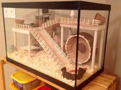DIY Hamster House Hey Pet Parents and Hamster Lovers. Do you want to build a great hamster house for your hammy, but you do not have the DIY skills to … How To Make A Durable, but Cheap Hamster house READ Teddy Hamster, Hamster Tank, Hamster Life, Syrian Hamster, Hamster Stuff, Diy Hamster House, Hamster Diy Cage, Gerbil Cages