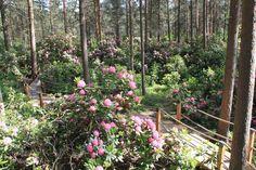 Helsinki   rhododendron park, Haaga