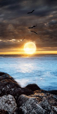 Find Image, We Heart It, Birds, Animation, Sunset, Wallpaper, Outdoor, Scenery Paintings, Drawings