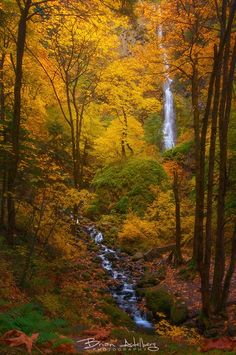 ~~Autumns Palette | fall color and waterfalls, Columbia River Gorge, Portland, Oregon | by Brian Adelberg~~