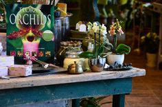 Botanica has unique items for all garden and plant lovers!