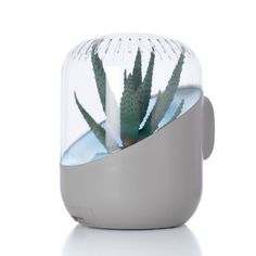 Check out what's on sale at TouchOfModern Plant-based air purifier  ~looks nicer than a plain old purifier