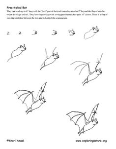 How to draw a bat.