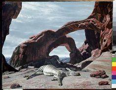 """Slapende zebra (Sleeping Zebra)"", 1959 / Carel Willink / Collection G. Okapi, Magic Realism, The Uncanny, Z Arts, Dutch Painters, Hyperrealism, Dutch Artists, Amazing Art, Netherlands"