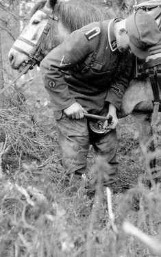 """This album has photos covering from the """"Kampfgruppe Nord"""" days until the Divisions demise on the Western Front in 1945. Some of these photos come from our dear friends in """"Michael Gaissmair"""" based..."""
