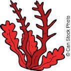 Afbeeldingsresultaat voor zeewier tekening