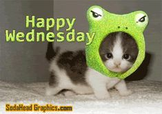 Kitty is happy its Wednesday, in animated fashion! Lol... #Wednesday #DailyGrind #WednesdayHumor