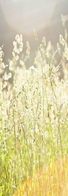 !!! The secrets of happines !!!                                              ~ bright summer sunlight ~