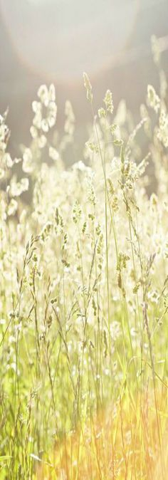 !!! The secrets of happines !!!                                              ~ bright summer sunlight ~