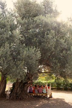 Picnic under the olive tree