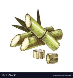 Hand drawn sugar cane vector image on VectorStock Watercolor Flower Vector, Floral Wreath Watercolor, Palm Tree Vector, Vector Trees, Coffee Icon, Paint Vector, Heart Hands Drawing, Fish Vector, Plating