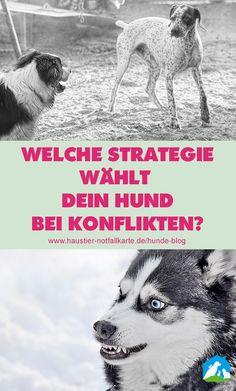 4 Konfliktstrategien des Hundes - welche Strategie wählt Dein Hund bei Konflikten? Jetzt im Haustier Notfallkarte Hunde Blog!