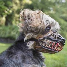 12 Finest Dog Muzzle For Licking Dog Muzzle Doberman Small Breed, Small Dogs, Outside Dogs, Dog Muzzle, Dog Teeth, Dog Care Tips, Outdoor Dog, Dog Behavior, Training Your Dog