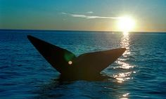 Whaling nations block South Atlantic sanctuary plans