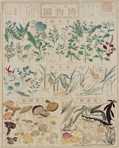 inland-delta:  Chikuyou Hasegawa(長谷川 竹葉), illustrated plant chart:  edible leaves , pungent herbs, mushrooms and seaweed, 1873 .