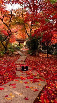 Autumn in Kyoto.Japan
