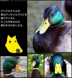 "As you see, every bird has a ""doggie mark"" on their face."