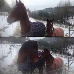 Thanks @trevmo123 ! #horse #horses #horseoftheday #horsesofinstagram #instahorse #instagramhorses #instapet #petsofinstagram #petoftheday #instagrampets #equestrian #equestrianlife #horsebackriding #horseriding #hackney #hackneyhorse #horselove #ilovemyhorse #demonpony #hackneypony #mylittlepony #ponychild #ilovemypony