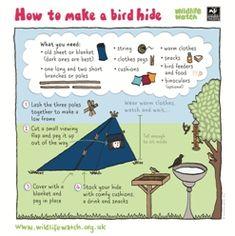 How to make a bird hide