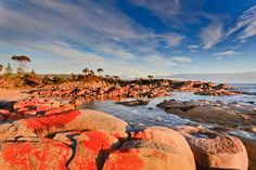 The Bay of Fires, Tasmania. 19 Surreal Places In Australia To Visit Before You Die Visit Australia, Western Australia, Australia Travel, Australia 2017, Brisbane, Sydney, Melbourne, Roadtrip, Great Barrier Reef