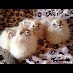 Fuzzy kittens!!