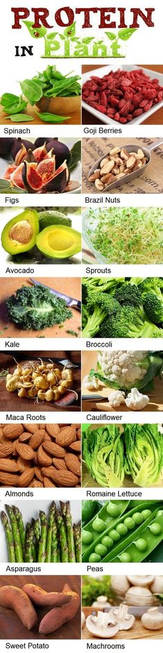 High Protein Foods List for Vegetarians by alternative-energy-gardning: Spinach, Goji Berries, Figs, Brazil Nuts, Avocado, Sprouts, Kale, Broccoli, Maca Roots, Cauliflower, Almonds, Romaine Lettuce, Asparagus, Peas, Sweet Potato, and Mushrooms. #Infographic #Plant_Proteins