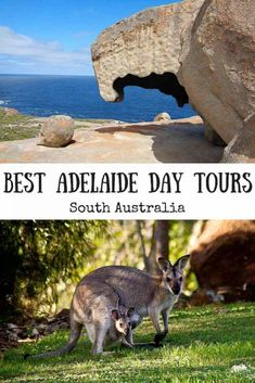 Here's a list of the best Adelaide day tours, including tours to Kangaroo Island, the Barossa Valley and the Adelaide Hills Brisbane, Sydney, South Australia, Western Australia, Australia Travel, Melbourne Australia, Visit Australia, Australia Holidays, Australia Kangaroo