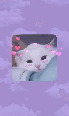 Funny Cat Wallpaper, Wallpaper Iphone Neon, Mood Wallpaper, Bear Wallpaper, Cute Wallpaper Backgrounds, Cute Cartoon Wallpapers, Aesthetic Iphone Wallpaper, Instagram Black Theme, Photo Chat