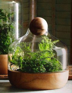 Small Danish Terrarium