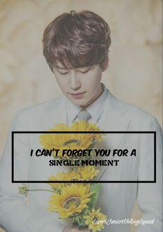 21 Best Super Junior Song Quotes images in 2018   Super