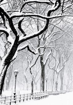Winter. Trees in the snow.