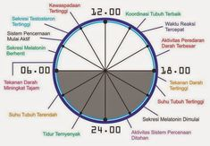 Jam biologi tubuh