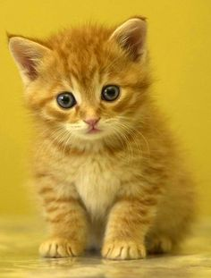 type='html'> Cute Dog Cat Jpg. Free Cute Cat Wallpaper For Mobile And Cell Phone. Cute Cats Cat W. Cute Kittens, Cute Cats And Kittens, Pretty Cats, Beautiful Cats, Animals Beautiful, Beautiful Soul, Cute Baby Animals, Animals And Pets, Animals Images