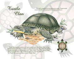 Turtle Clan