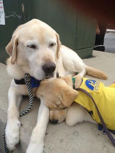 Hero in training: Canine Companions For Independence service puppy Spike — spending time with his mentor Mahler.  We are very proud to support them!