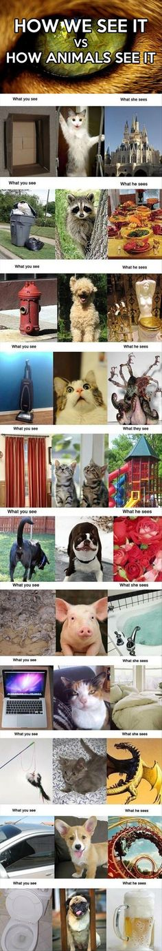 How we see it ...and how animals see it. More amazing and fun stuff at http://funiest-stuff.com/funny-dog-pictures/